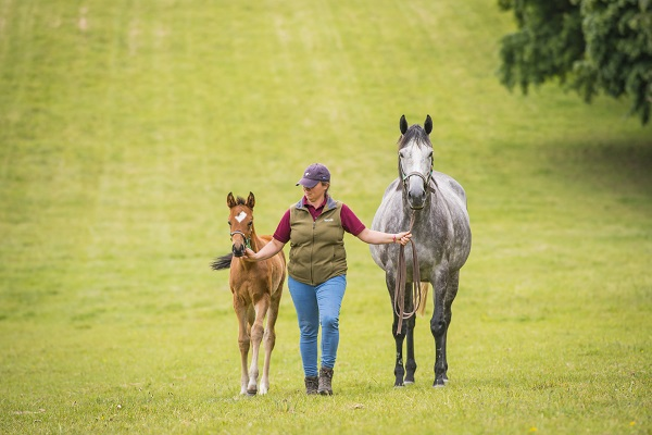 Thoroughbred Breeding Industry Recruitment, Skills & Retention Research 2019