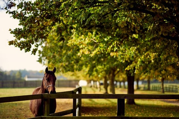The National Stud's full 2021 Evening Lecture Programme moves online and is open to all Image