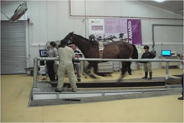 The Racing Foundation is funding 3 new equine science research projects due to start this year Image